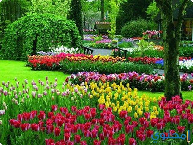 تفسير رؤية البستان والحدائق في الحلم لابن سيرين