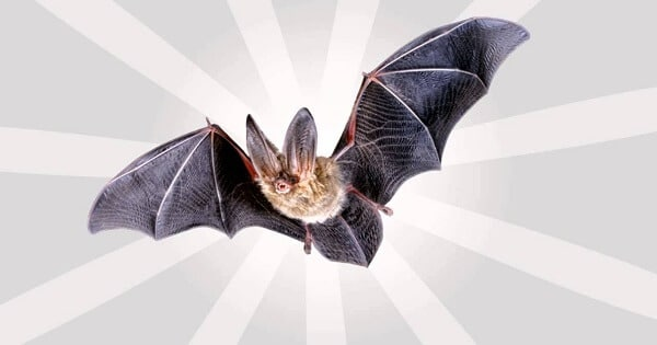 تفسير الاحلام والرؤي الوطواط في المنام