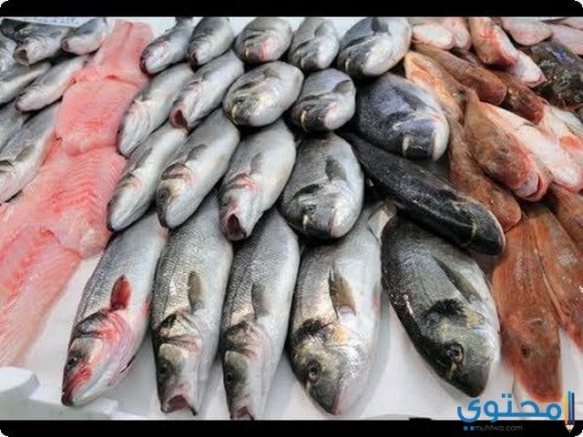 تفسير صيد السمك في المنام بالتفاصيل The Next Pro