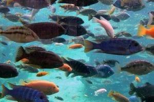 تفسير حلم رؤيه السمك بالمنام