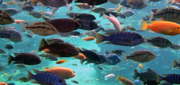تفسير رؤيه السمك بالمنام