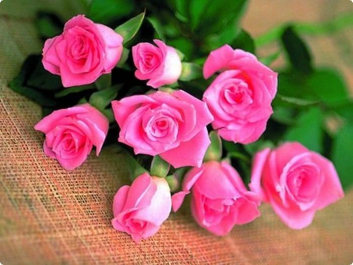 صور ورود رومانسية جديدة 2020 صور زهور وباقات ورد موقع محتوى