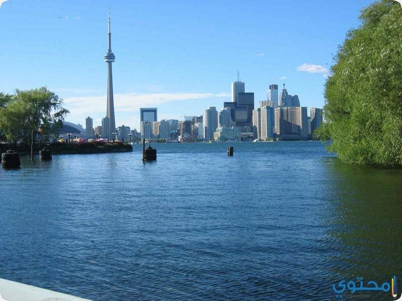 جزيرة تورونتو