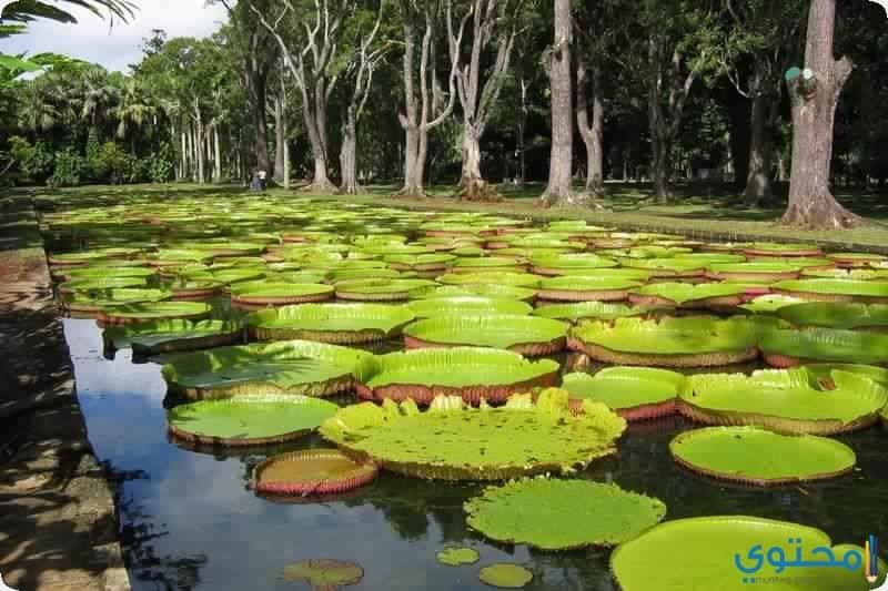 حدائق بامبليموس النباتية