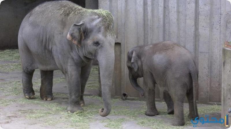 حديقة حيوانات أوريغون