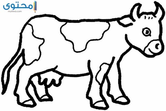 رسومات حيوانات