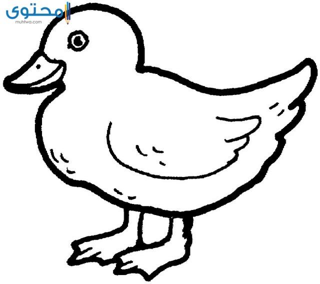 اشكال طيور للتلوين