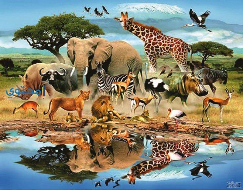 دلالات رؤية الحيوانات فى الحلم