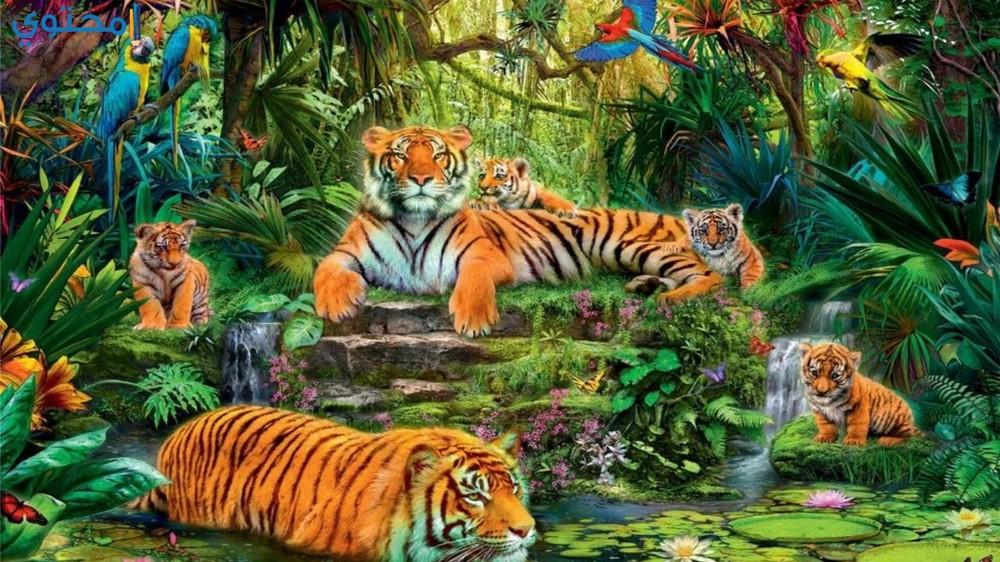أجمل صور النمور 2020