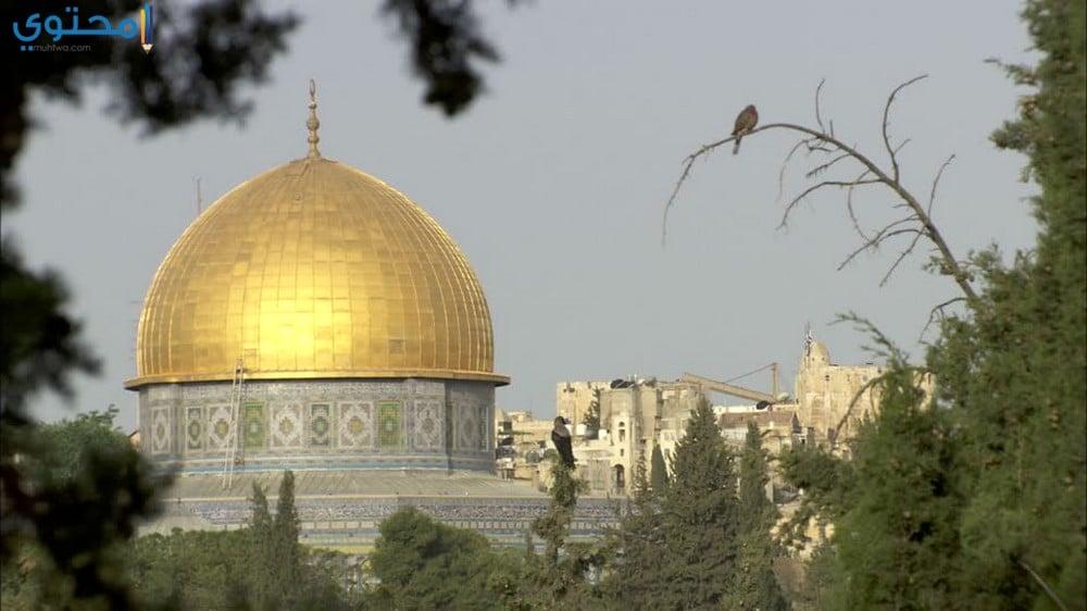 خلفيات عن القدس جديدة