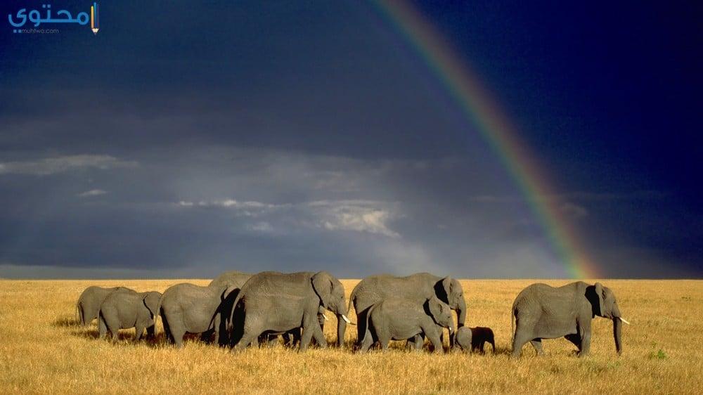 خلفيات حديثة عن الفيل