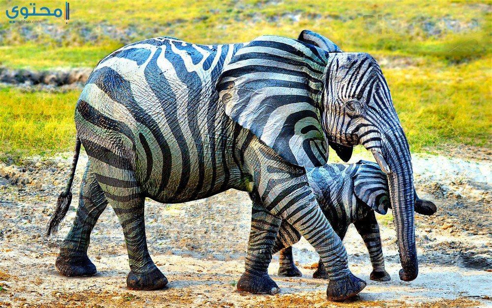أجمل الصور الفيل