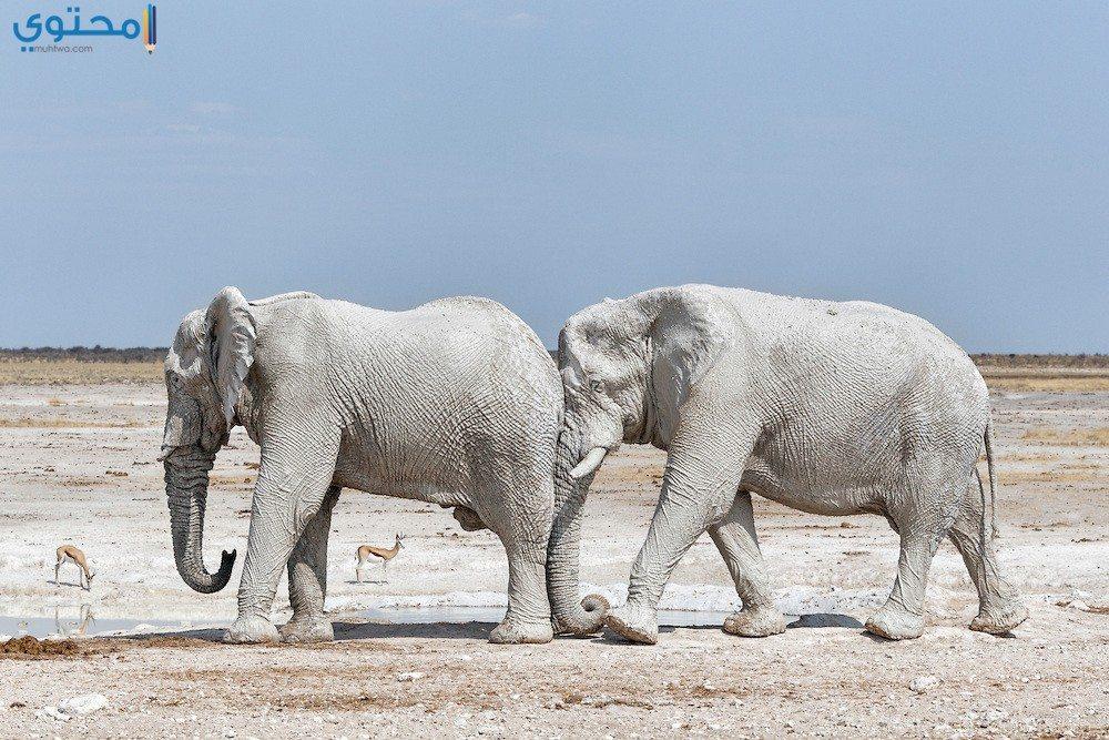 خلفيات فيل