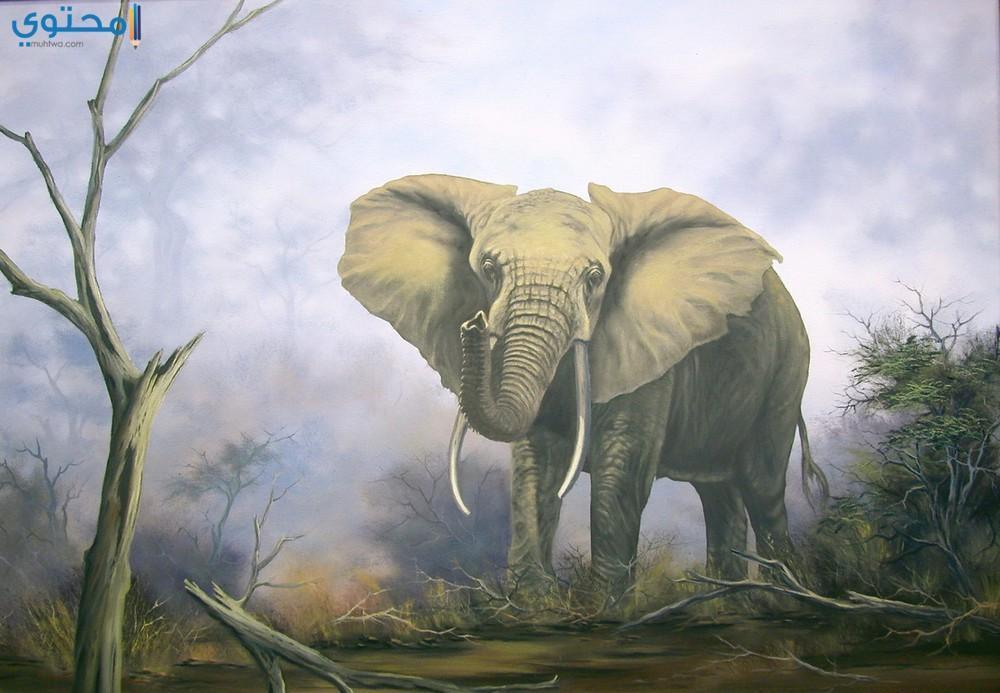 خلفيات فيل 2018