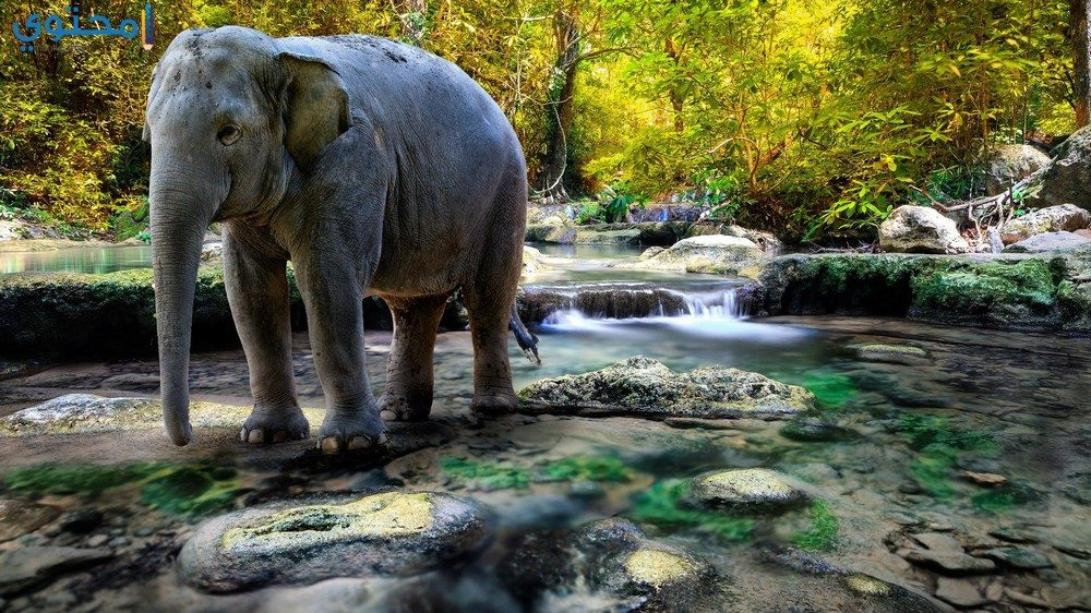 صور الفيل 2018