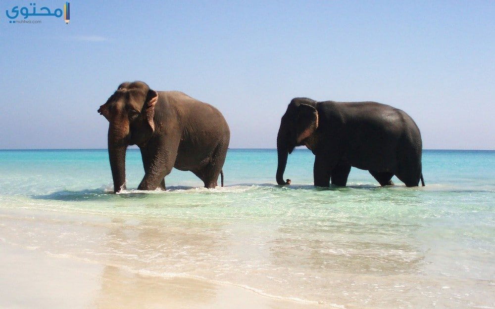 أجمل فيل