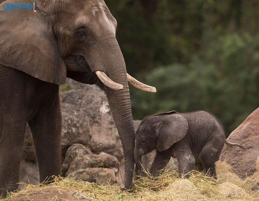 رمزيات فيلة لتويتر