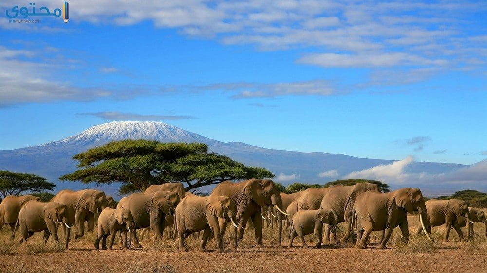 خلفيات فيل للأيفون