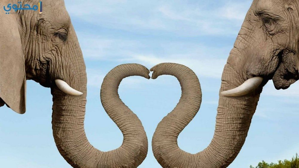 خلفيات فيلة تحفة