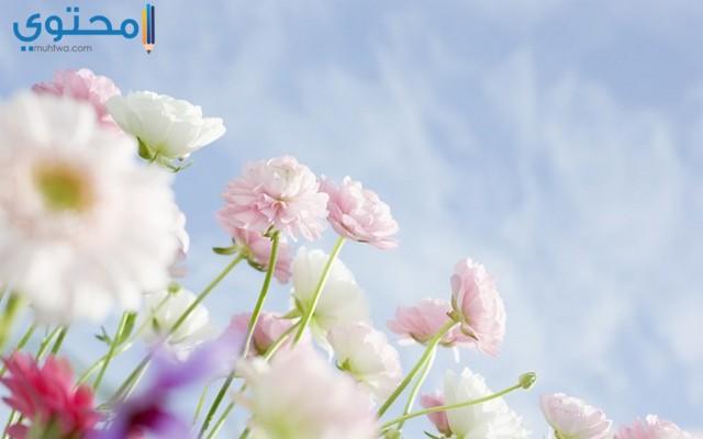 اجمل الصور عن عيد الربيع
