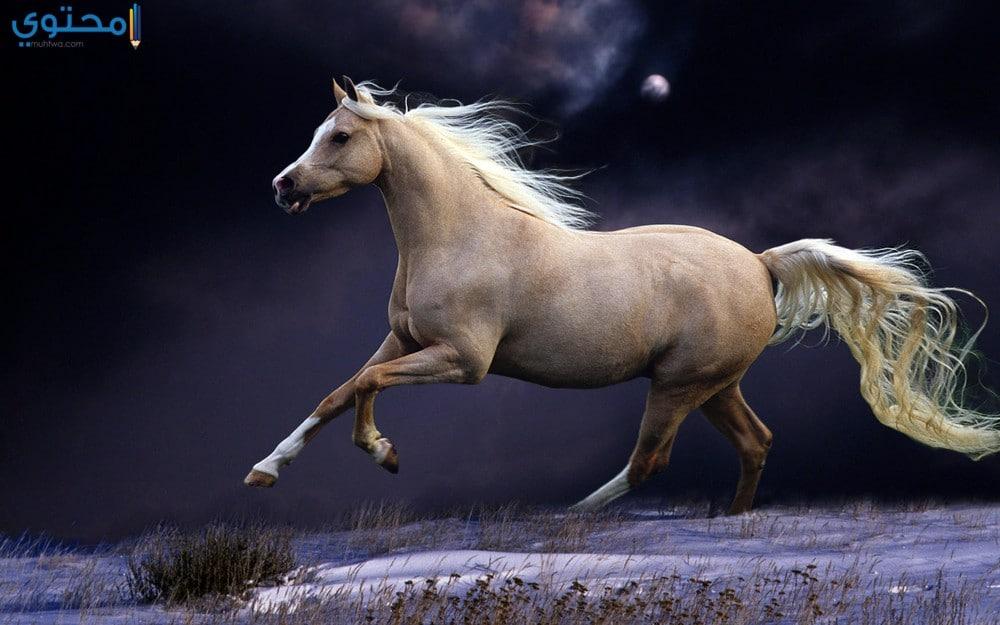 أجدد خلفيات الخيول العربية