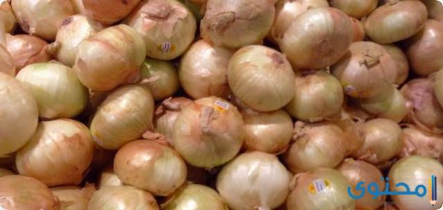 دراسة جدوى مشروع تجارة البصل