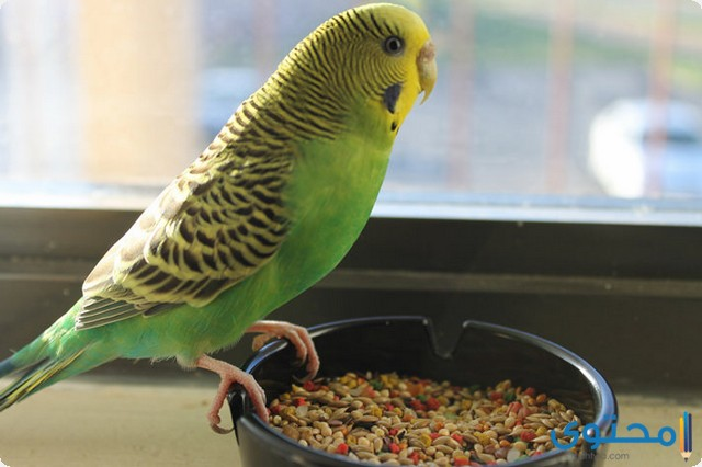 دراسة جدوى مشروع تربية عصافير الزينة