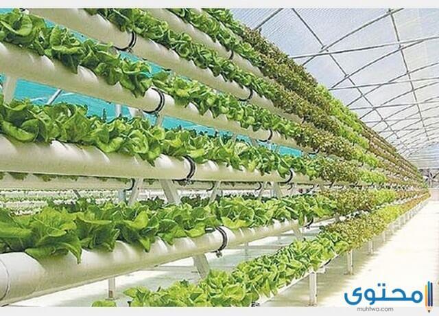 دراسة جدوى مشروع زراعة الخضروات