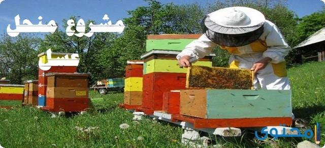 مشروع منحل عسل