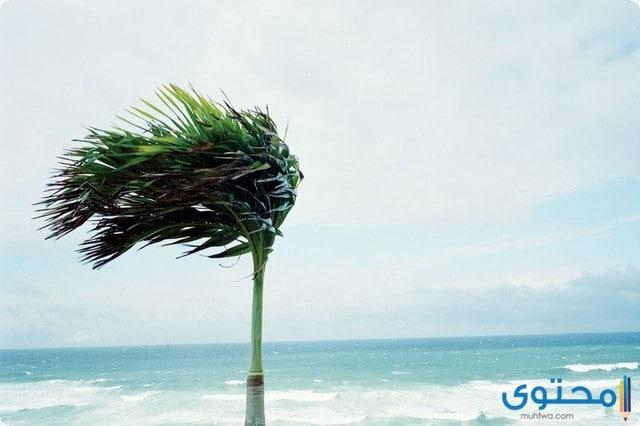 فوائد الرياح