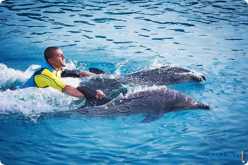 السباحة مع الدلافين
