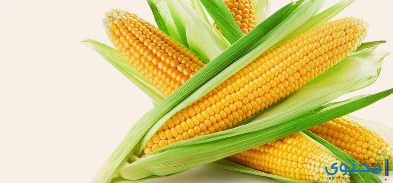القيمة الغذائية للذرة الصفراء