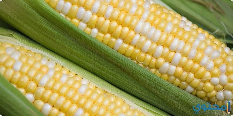 فوائد الذرة للصحة