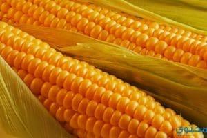 فوائد الذرة الصفراء للصحة والحامل ولخسارة الوزن