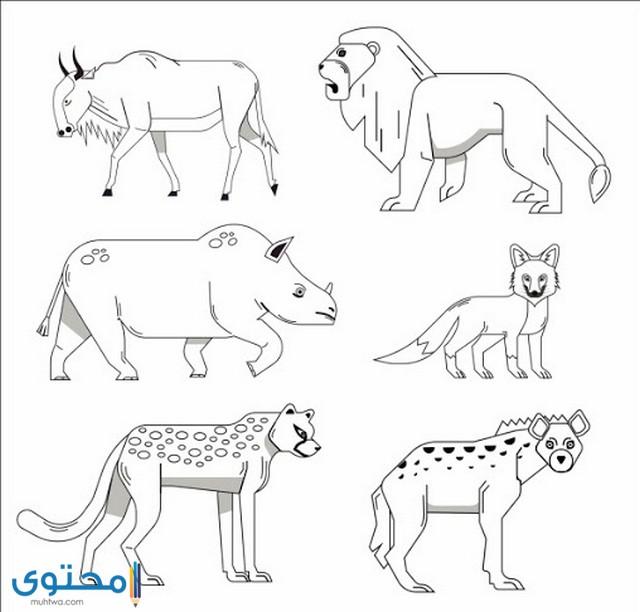 صور رسم حيوانات للأطفال 2021 رسومات حيوانات ملونة موقع محتوى