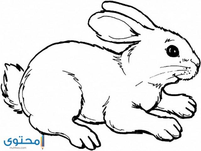 رسومات تلوين للاطفال للطباعة