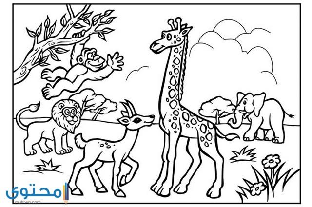 رسومات للتلوين حيوانات