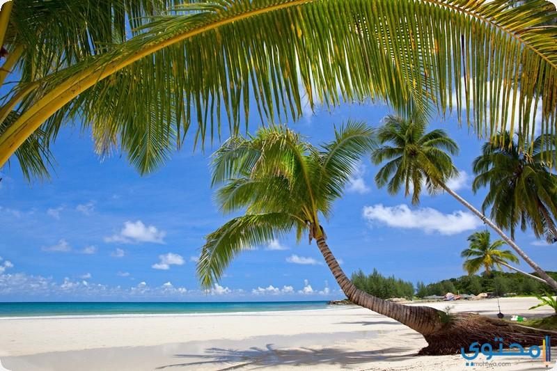 جزيرة ساونا