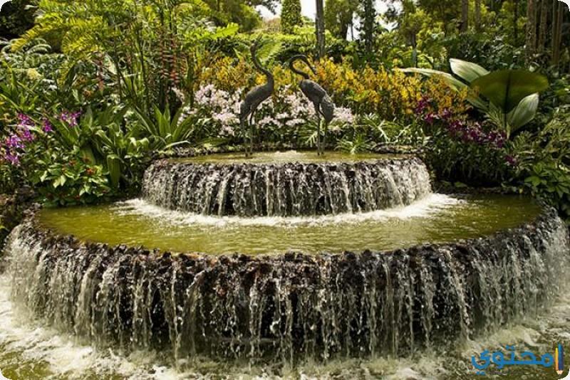 حديقة سنغافورة النباتية من الداخل