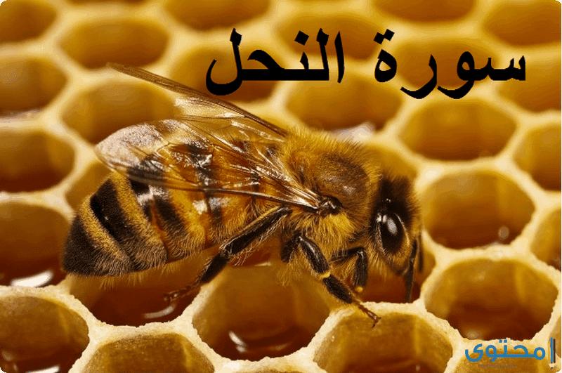فضل تلاوة سورة النحل