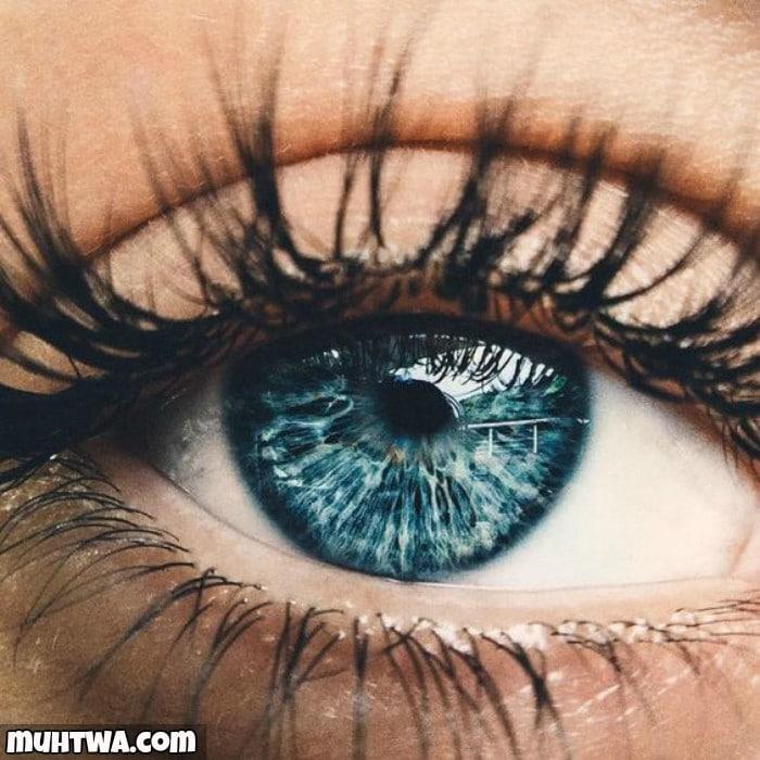 صور عن العيون