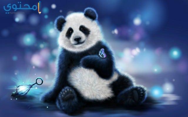 خلفيات دب الباندا روعة