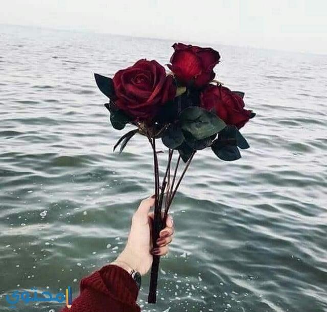 ورد ع البحر