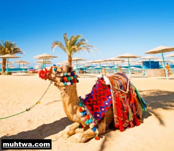صور جو مصر