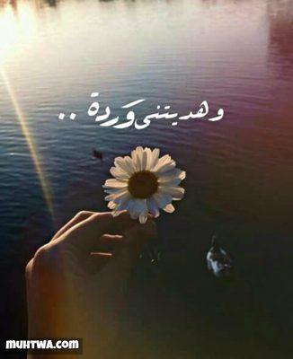 صور حب لبنانية