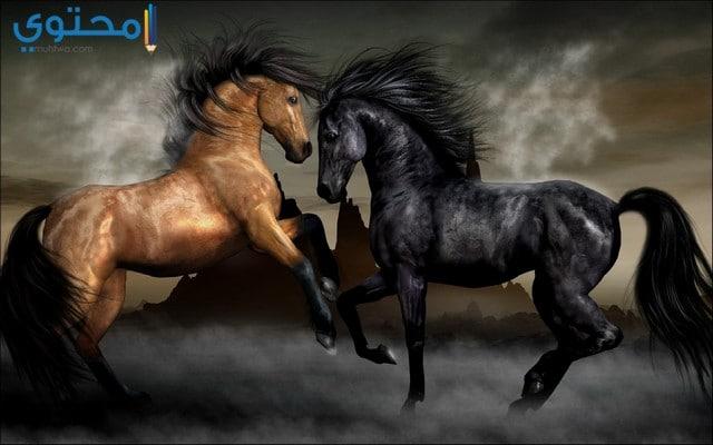 خيول رومانسية