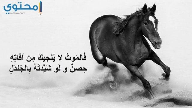 صور خيول مكتوب عليها