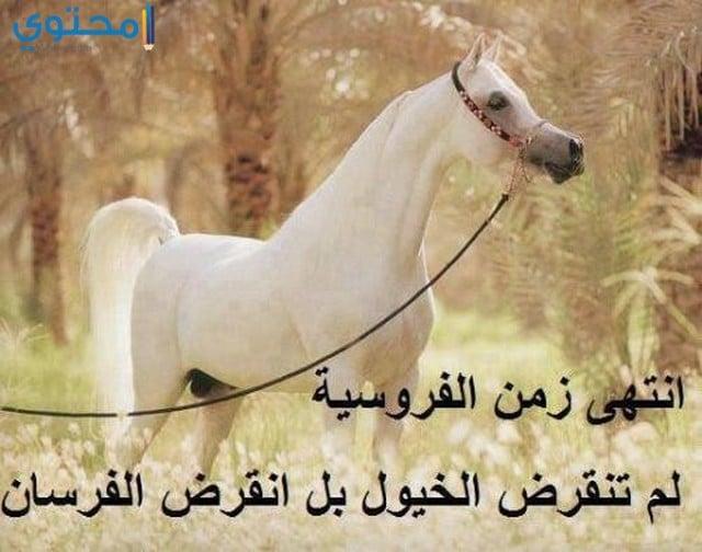 صور اجمل الخيول العربية