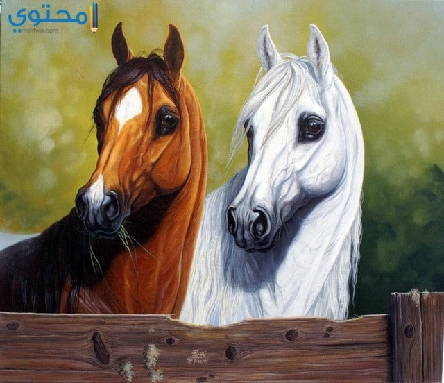 خلفيات خيول كيوت