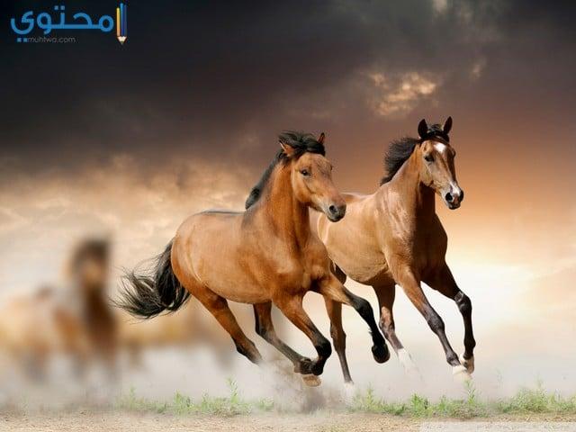 خلفيات احصنة جميله